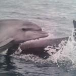 delfini fotka blizu