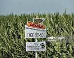 Monsanto crops