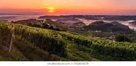wine Slovenija