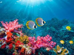 koralni grebeni 1