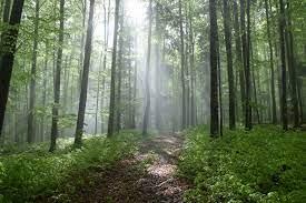 slovenski gozd